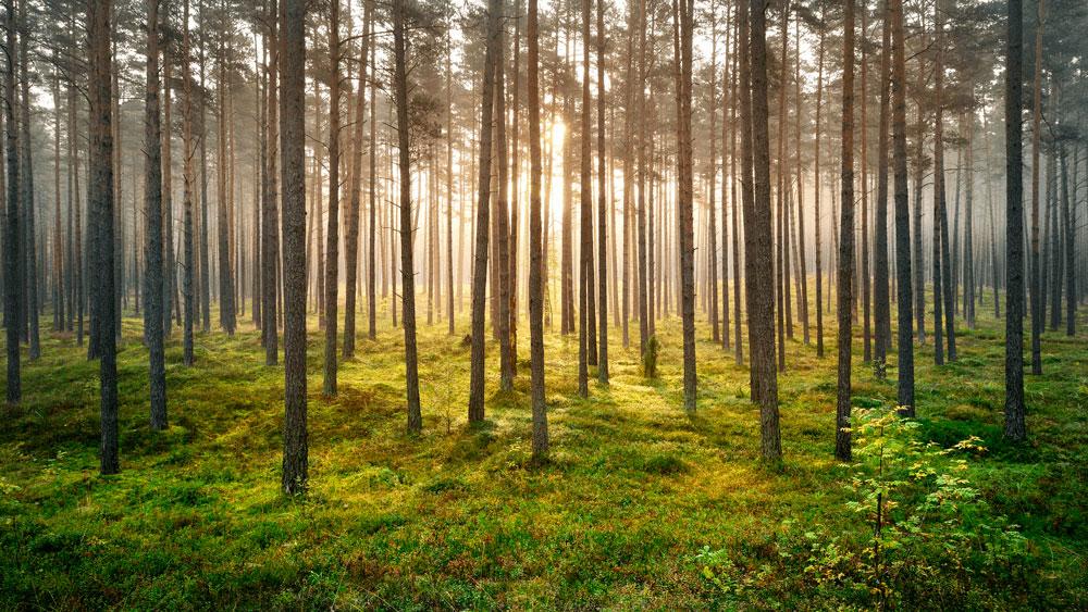 シルキーワンは樹木からできています